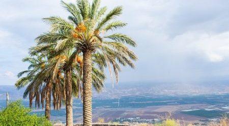 ישראל 2050